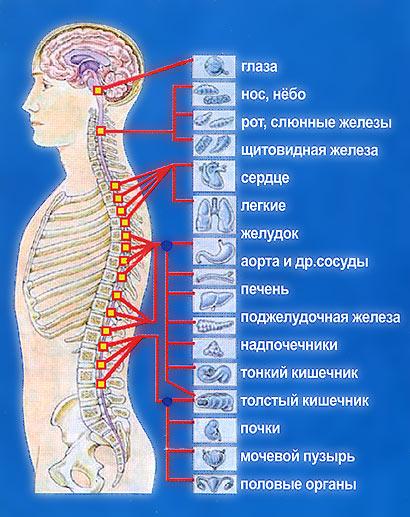 Бодитач в Симферополе, массаж и расслабление